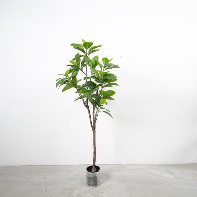 고무나무 150cm