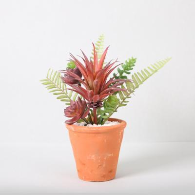 다육식물 다육이 미니화분 믹스부쉬 30cm