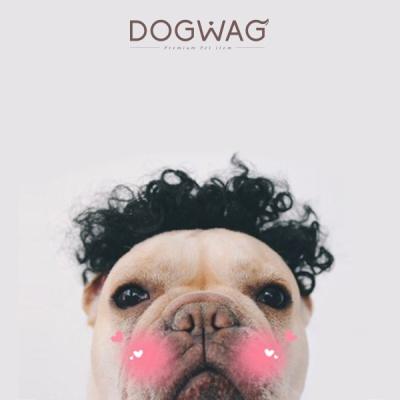 [도그웨그 DOGWAG] 강아지&고양이 뽀글머리 가발