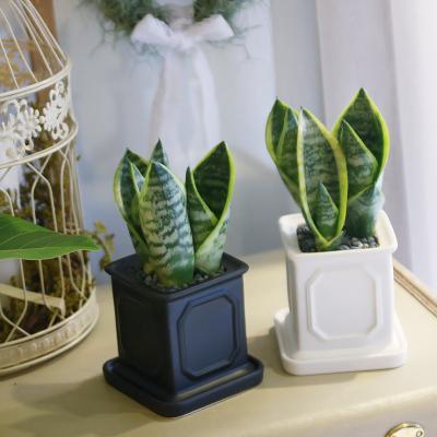 몰딩 화분 산세베리아 공기정화식물