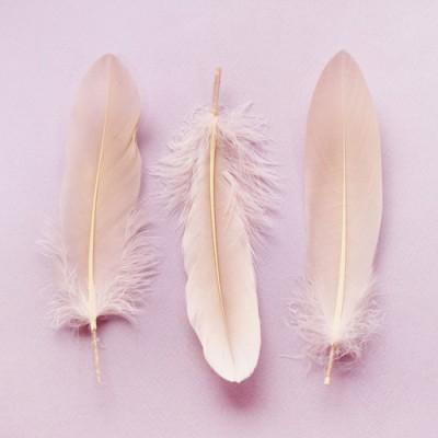 피치깃털(M) 5p