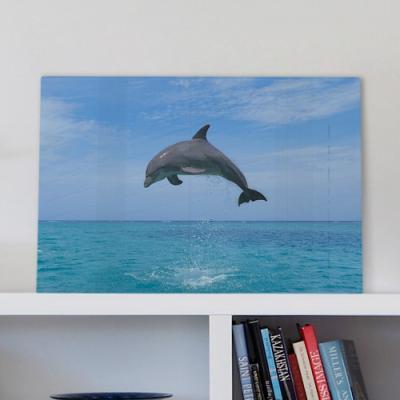 pi072-폼아크릴액자58CmX38Cm_웃고있는돌고래