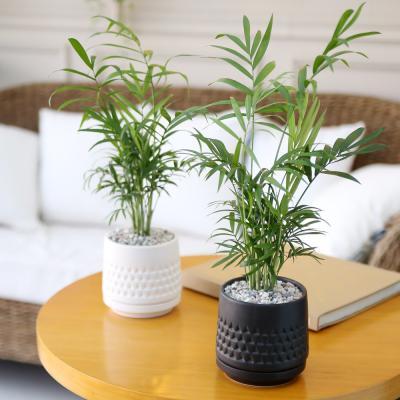 모노 화분 테이블 야자 공기정화식물