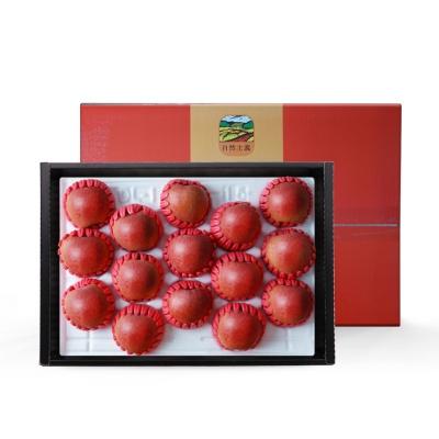 경북 사과 선물세트 4kg/14-16과내외(중대과)