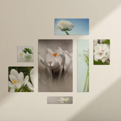 cf409-멀티액자_흰색을가진꽃
