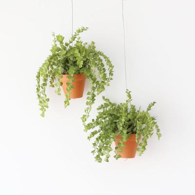 행잉토분 디시디아 밀리언하트 공기정화 먼지먹는식물