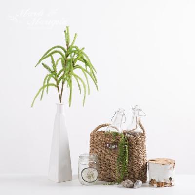 [마쉬매리골드]조화스프링 삼나무가지_70CM