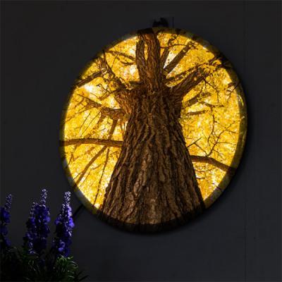 nh547-LED액자25R_액운막아주는은행나무