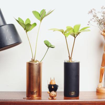 미니화분 멕시코소철을 심은 실린더화기 공기정화식물