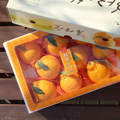 [과일연풍] 청정제주 한라봉 세트 3kg/11~12과