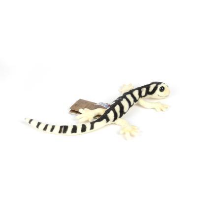 5228번 도롱뇽 Bulldog Salamander/38cm.L