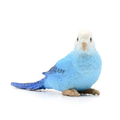 150629 잉꼬 Blue Budgie