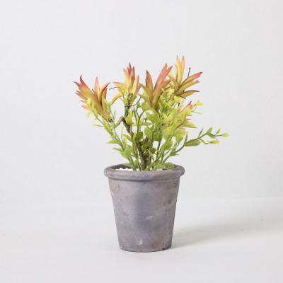 다육식물 다육이 미니화분 다육식물부쉬 35cm