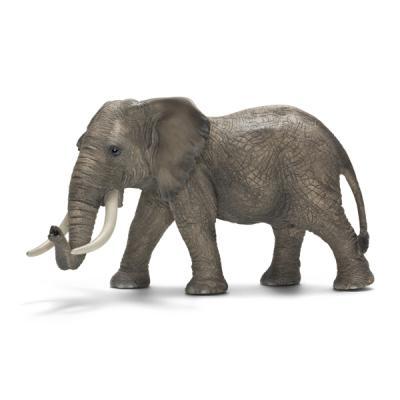 수컷 아프리카 코끼리