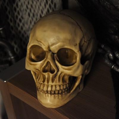 고급 해골모형(두개골)