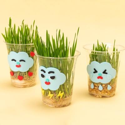 어린이 밀싹 키우기 5세트