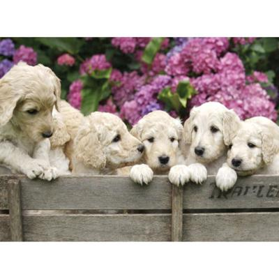 귀여운 강아지형제[1000피스/직소퍼즐/동물/BN10-065]