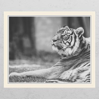 pc678-풍수흑백호랑이4_창문그림액자
