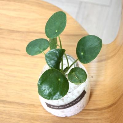 쁠랑뜨 - 수경재배 5종세트