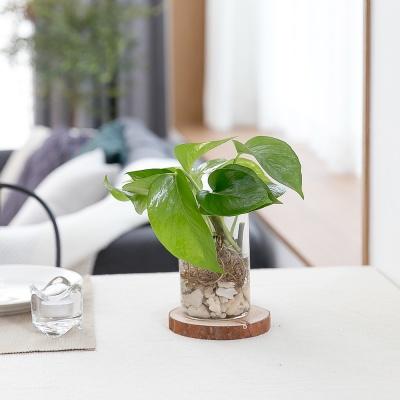 천연가습기 수경재배식물 8종 택1