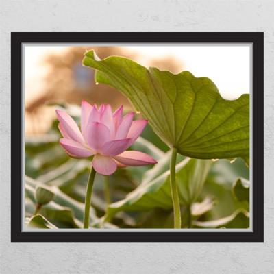 ij982-행복을주는연꽃4_창문그림액자