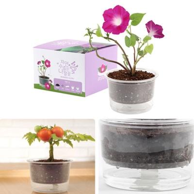 자동물공급 삼투압화분 나팔꽃씨앗 흙 세트
