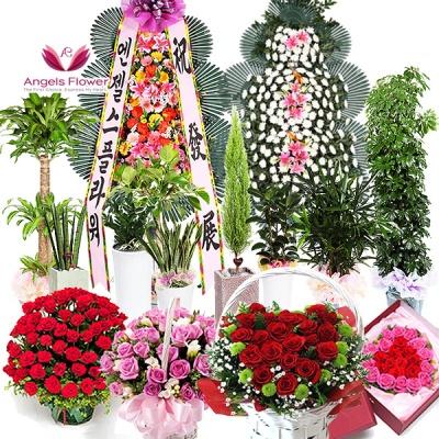 [엔젤스플라워] 너를위한 장미 꽃상자_고급형 AGFYHF05PR