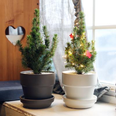 크리스마스트리 미니화분 코니카+모던세라믹팟
