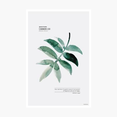 보타닉가든 포스트카드 엽서 - Common ash