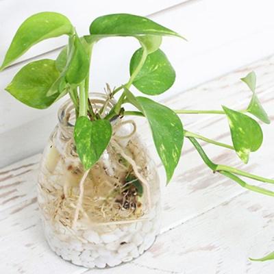 그 여자의 정원 (수경식물+유리병세트)
