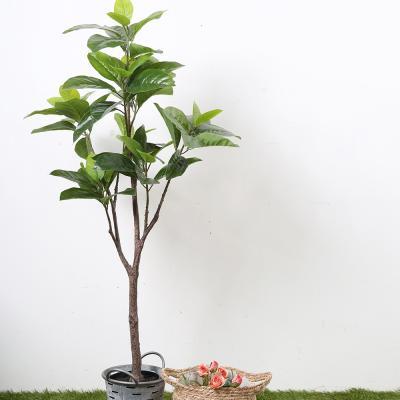 고무나무 120cm