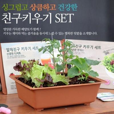 식물키우기 재배 채소키우기 세트