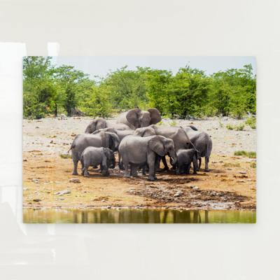 cr975-폼아크릴액자78CmX56Cm_아프리카코끼리