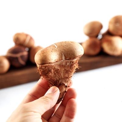 [향채움][上품] 참송이버섯 500g 선물세트