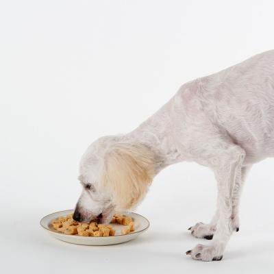 강아지 가수분해 수술후회복 양고기치즈트릿(50g)