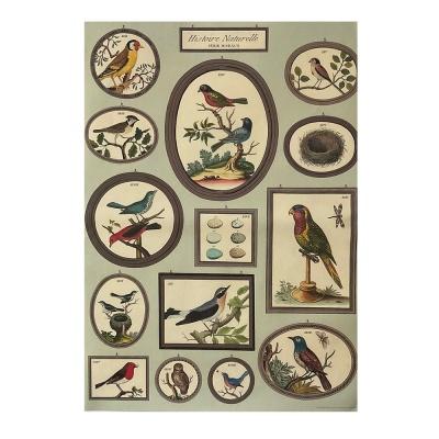 카발리니 일러스트 빈티지포스터 Birds2