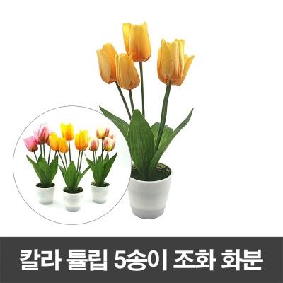 칼라 튤립 5송이 조화 화분