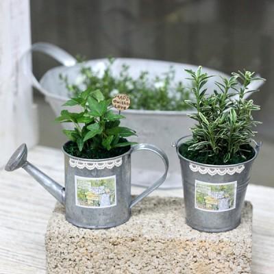 공기정화식물-그린틴2P세트