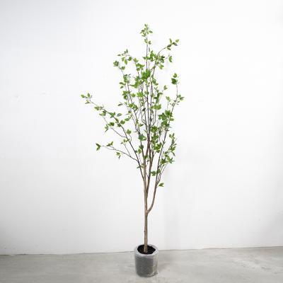 동백나무 180cm