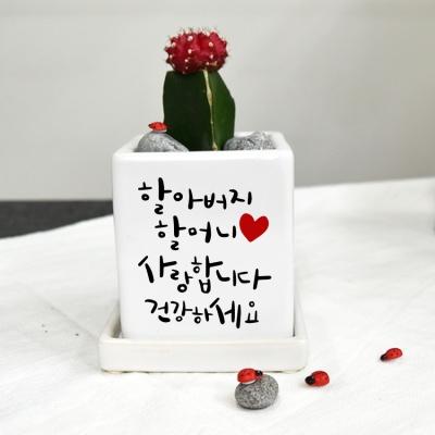 [사랑합니다 감사합니다  ] 캘리그라피 컬러미니화분
