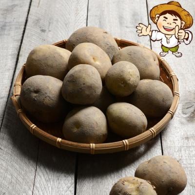 [시골농부] 포슬포슬 황토흙 감자 10kg/100개내외