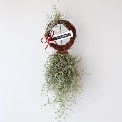 모빌링스수염 푼키아나(미니)공기정화 먼지먹는식물