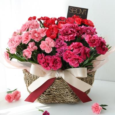 [서울당일수령] 싱그러운 카네이션 바스켓 꽃바구니