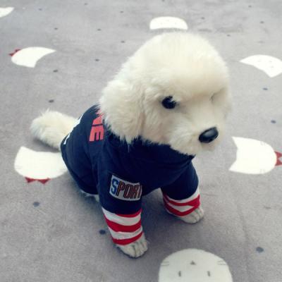 [펫딘]줄무늬 레이어드 강아지옷 후드