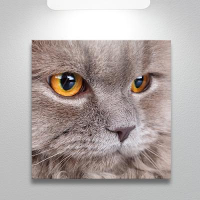 cq173-고양이의얼굴확대_소형노프레임
