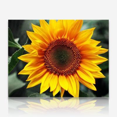 해바라기꽃 DIY 보석십자수 십자수 비즈세트
