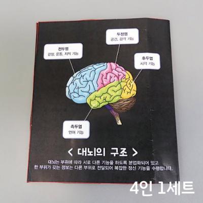 뇌와 구조의 기능(4인)