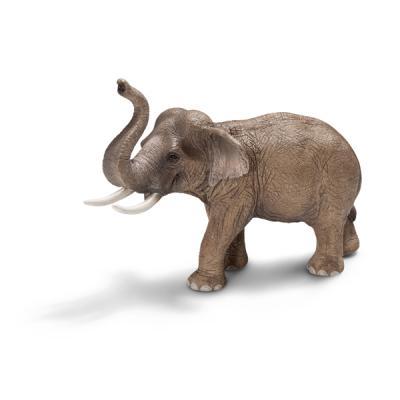 수컷 아시아 코끼리