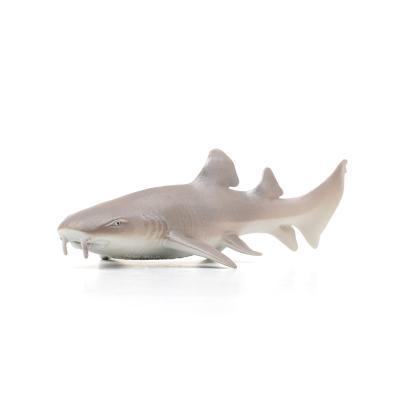 200629 수염상어 Nurse Shark