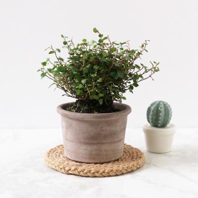 미니 이태리 토분-다육이 / 공기정화식물